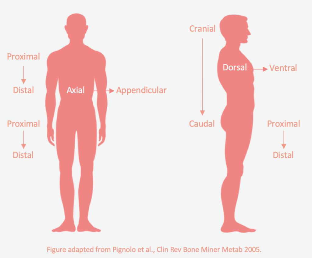 Disease progression